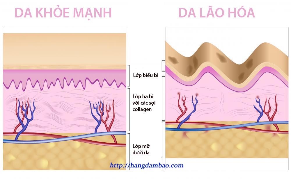 cau-truc-dakho-manh-va-thieu-collagen