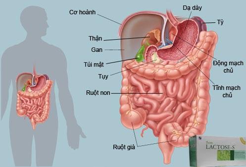 lactose-s-thai-doc-elken
