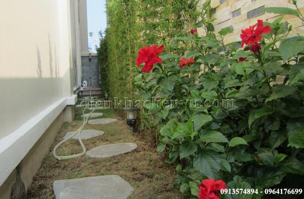 vườn đẹp trong phố