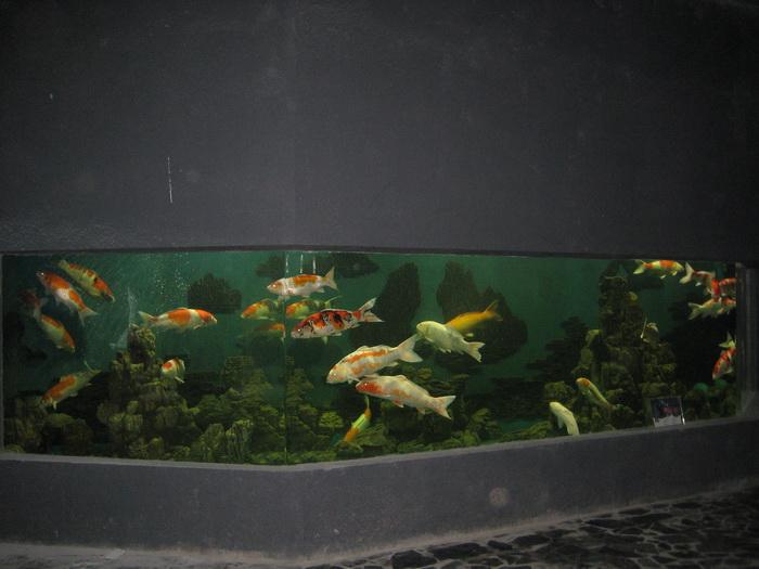 Hồ cá Koi Hiện Đại