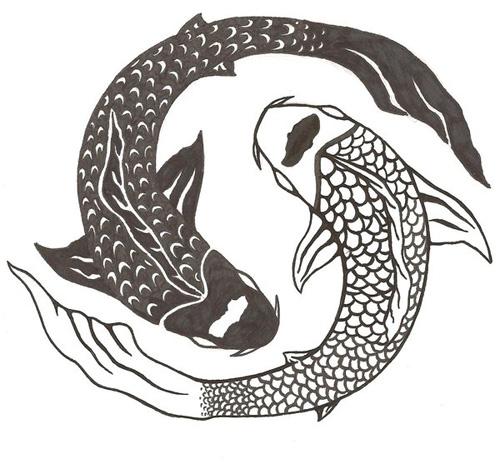 phong thủy cá Koi