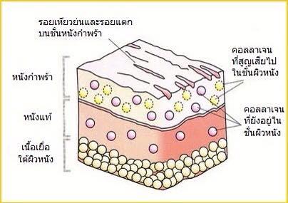 Đặc điểm của EGF
