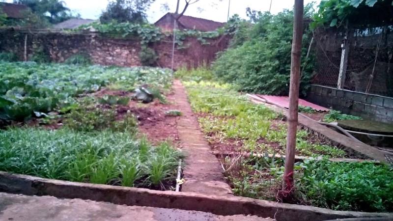 Khu trồng rau sạch của trang trại