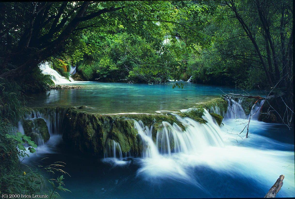 Du lịch Khám Phá Rừng Quốc Gia Bạch Mã 1 Ngày (1) - Handetour