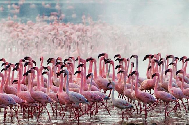 Công viên quốc gia Hồ Nakuru