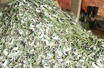hoa atiso khô đà lạt 01