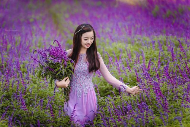 Hoa oải Hương Lào Cai