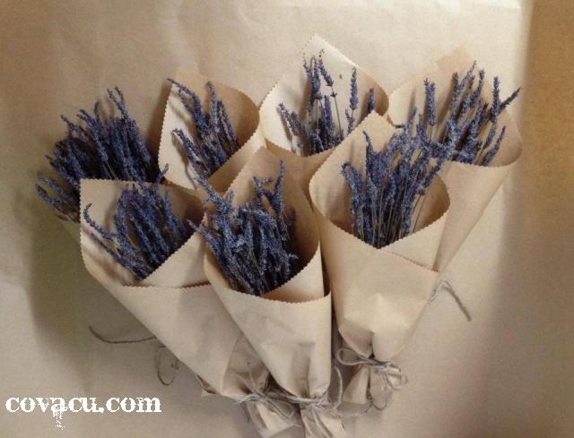 lavender kho Phap