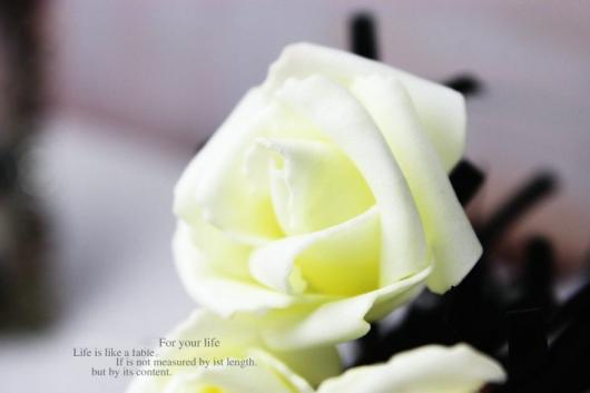 ban hoa hong gia dep