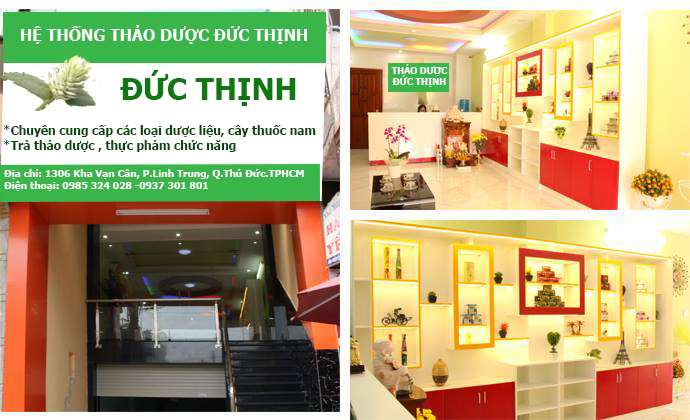thao duoc duc thinh