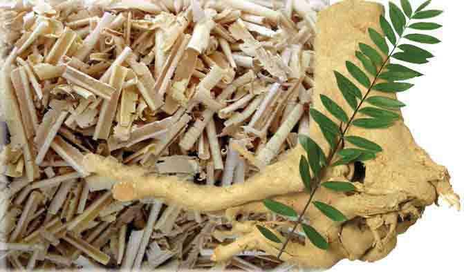 Tác dụng của rễ cây Mật nhân - 193012
