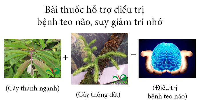 cay-thong-dat