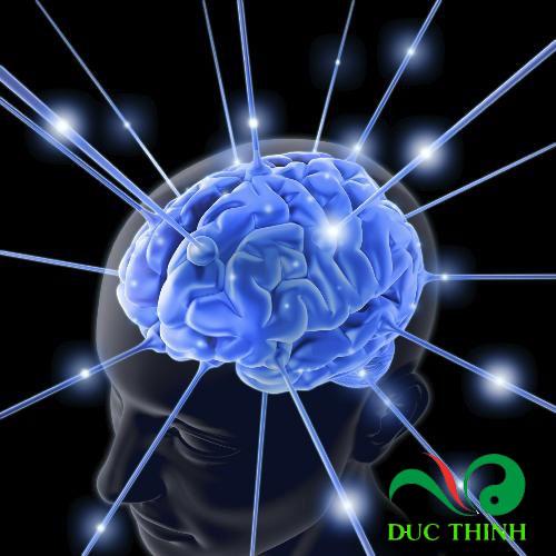 cây thông đất chữa bệnh teo não