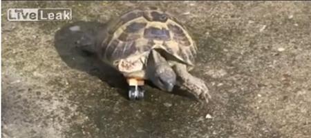 chú rùa mang chân lego