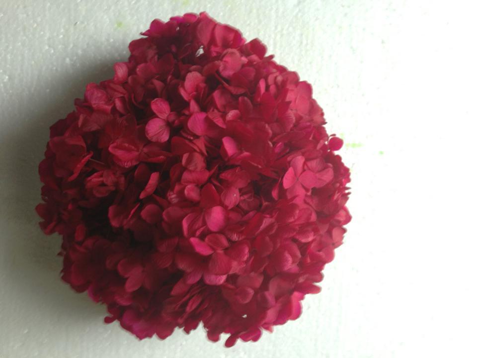 Hoa Cẩm Tú Cầu Đỏ Đậm Tươi Mãi Mãi