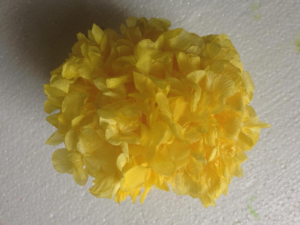 Hoa Cẩm Tú Cầu Vàng Tươi Mãi Mãi