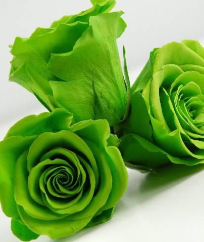 Hoa Hồng Xanh Là Magic _Deep Green