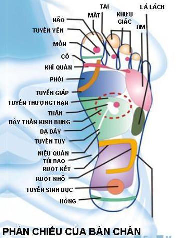 Cấu tạo bàn chân