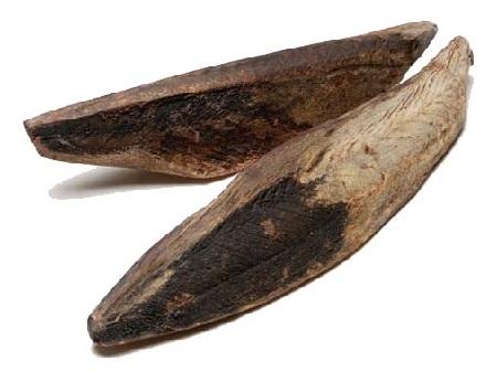 cá bào hình dạ như khúc gỗ