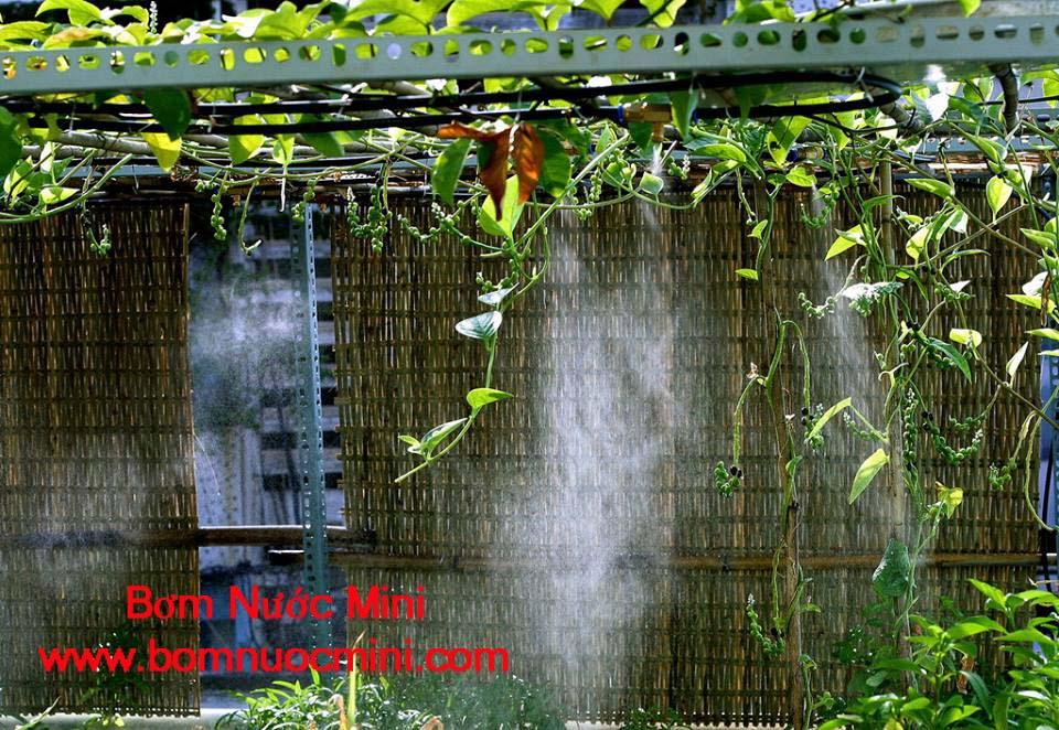 phun sương vườn rau