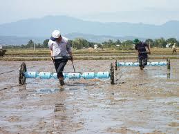 kỹ thuật gieo sạ lúa bằng máy kéo tay