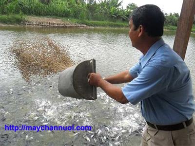 kỹ thuật chế biến thức ăn thủy sản