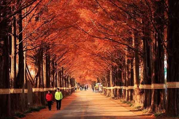 Những con đường nên thơ và lãng mạn nhất thế giới khi đất trời vào thu