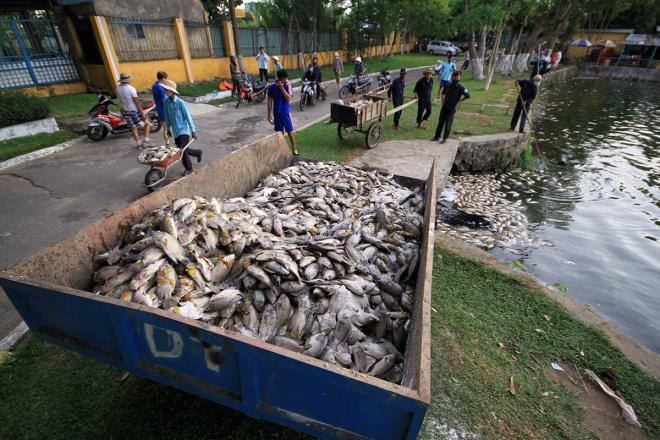 Nước ô nhiễm làm cá chết trắng hồ tại Đà Nẵng