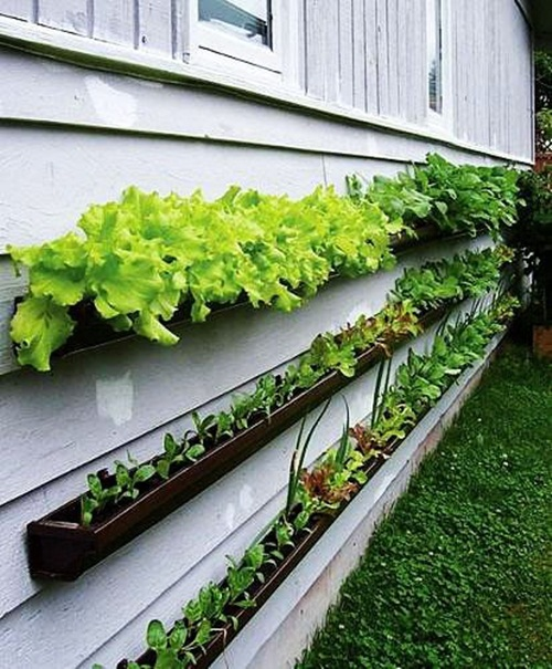 Bờ tường nhà bạn vẫn có thể thêm những khoảng xanh cho ngôi nhà nhỏ