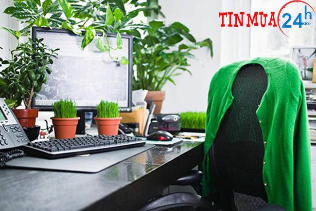 Trồng cây xanh trang trí góc làm việc tạo cảm hứng