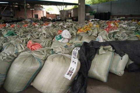 Nấm được ngâm trong hóa chất chờ đưa ra thị trường tiêu thụ