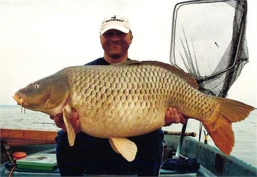 cá chép khổng lồ