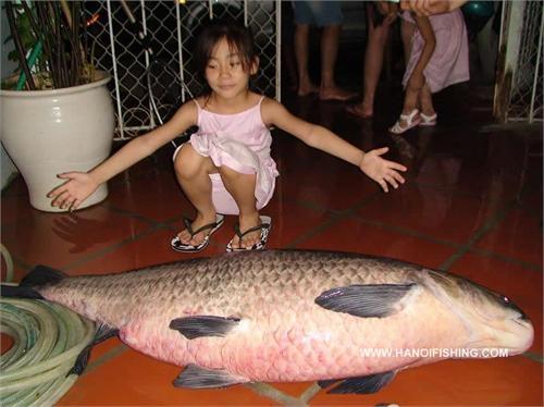 cá trắm khổng lồ