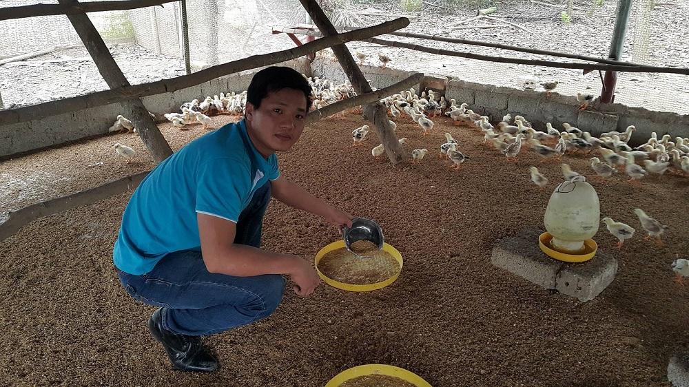 gà ri bóc trứng