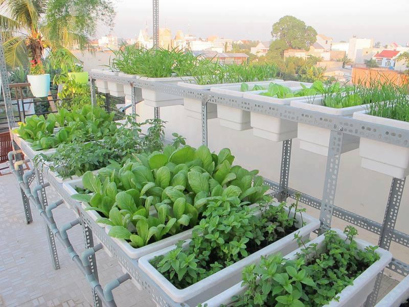 vườn rau sạch trồng thùng xốp tuyệt đẹp