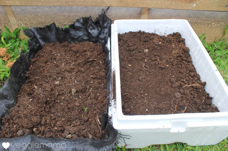 mùn cưa để trồng rau sạch tron thùng xốp