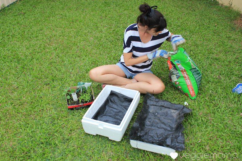 trồng rau trong thùng xốp không yêu cầu cao về không gian