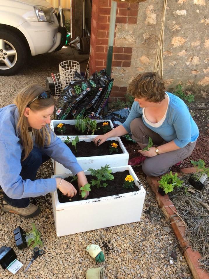 Cách trồng rau sạch trong thùng xốp 3