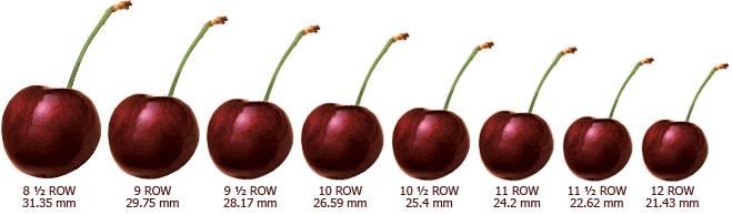 bảng chia size cherry