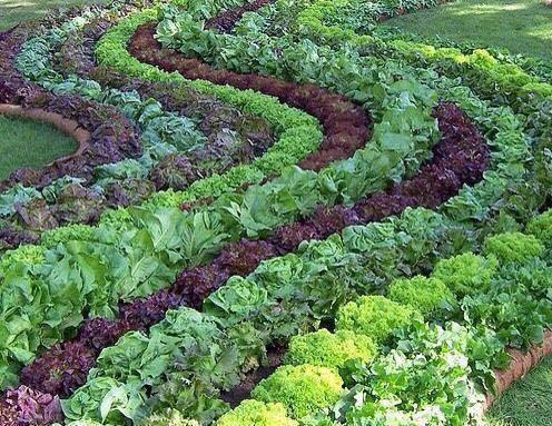 một vườn rau sạch tuyệt vời