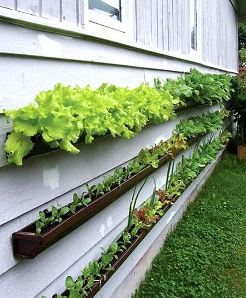mô hình vườn đứng phù hợp với nhiều loại rau củ