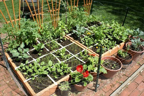 Mô hình trồng rau sạch 2: Vườn chia ô