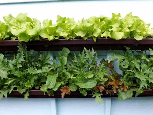 mô hình trồng rau sạch vườn đứng