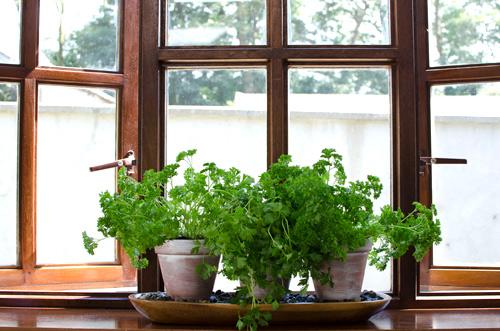 Mô hình trồng rau sạch 4: vườn đặt trong nhà