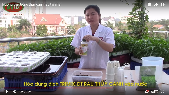 trong rau thuy canh 4