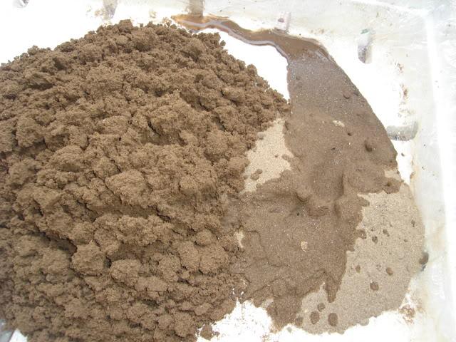 cát để trồng rau mầm