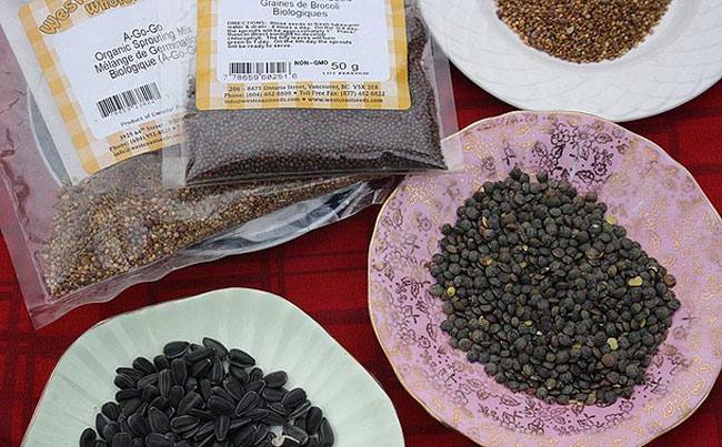 hạt giống để trồng rau mầm