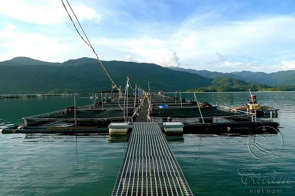 Trang trại nuôi cá tầm Beluga