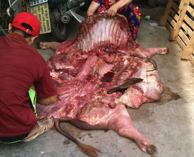 Lợn chết, lợn ôi