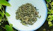 Snow Green Special Tea (Trà Shan Tuyết đặc biệt)